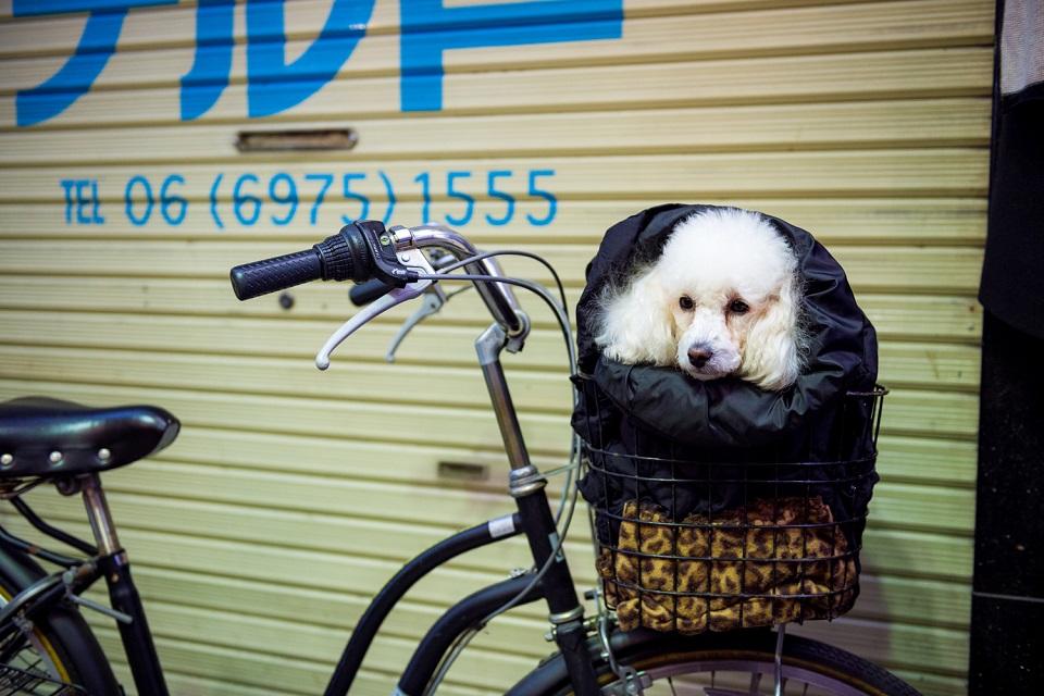 Osaka Rebooted - Tsuruhashi Poodle - EYExplore