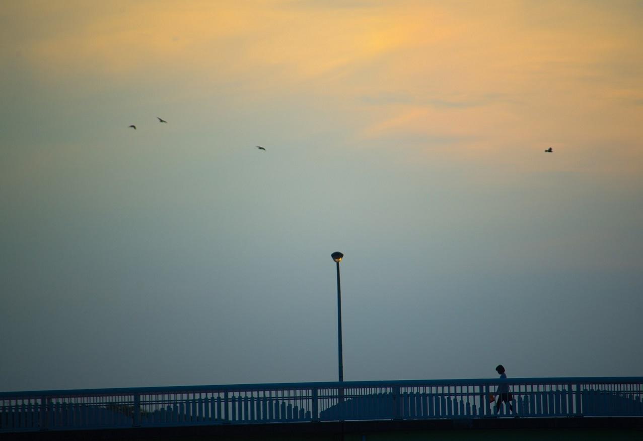 Bridge in Shiroi Chiba Japan - horizon not straight - eyexplore