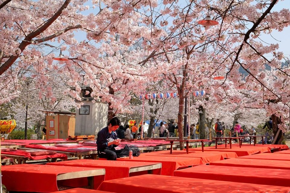 Kyoto's Finest: Cherry Blossom Season - EYExplore - These red platforms will be packed with people drinking at hanami parties in the evening at Maruyama park.
