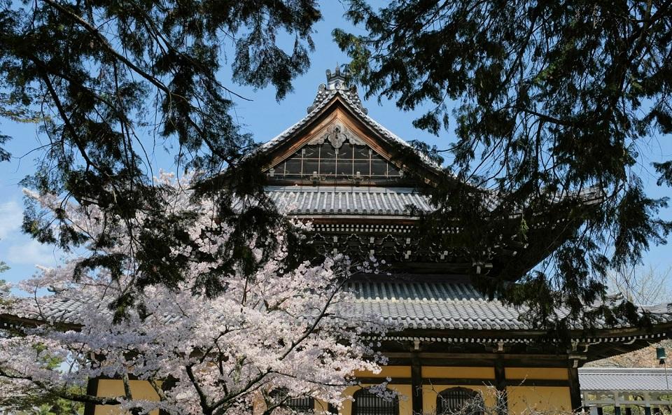 Kyoto's Finest: Cherry Blossom Season - EYExplore - Cherry blossoms at Nanzenji Temple