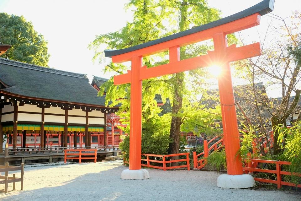 Kyoto's Finest: Cherry Blossom Season - EYExplore - A torii gate at Shimogamo Shrine.