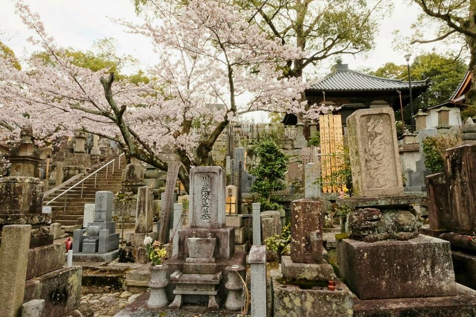 Kyoto's Finest: Cherry Blossom Season - EYExplore - The cemetary between Kurodani and Shinnyodo. Remember to be respectful here.