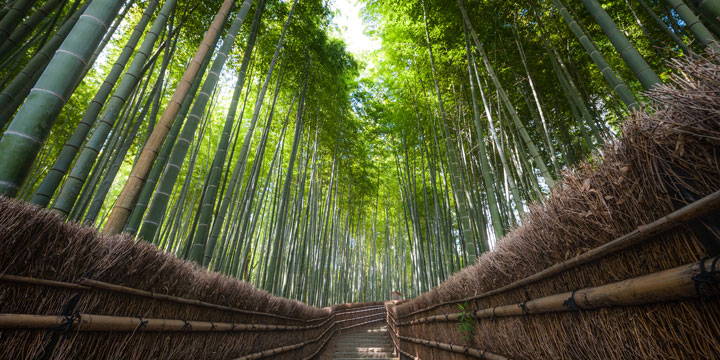 A hidden bamboo groves away from the tourist spots in Kyoto—a prime location for working on composition and creative techniques during the workshop