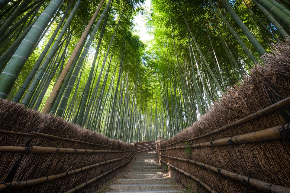 Bamboo grove in Kyoto - EYExplore