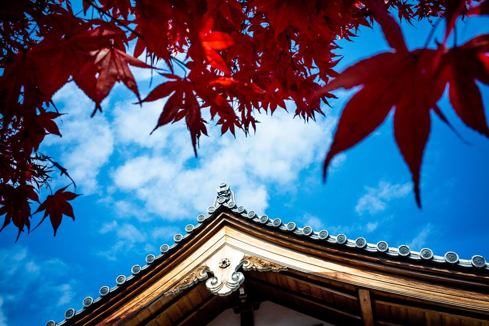 The eaves of a temple meet the red foliage o a Japanese maple tree in Kyoto - EYExplore