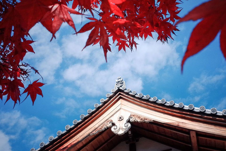 Temples and Maple Tree in Kyoto, Japan - EYExplore