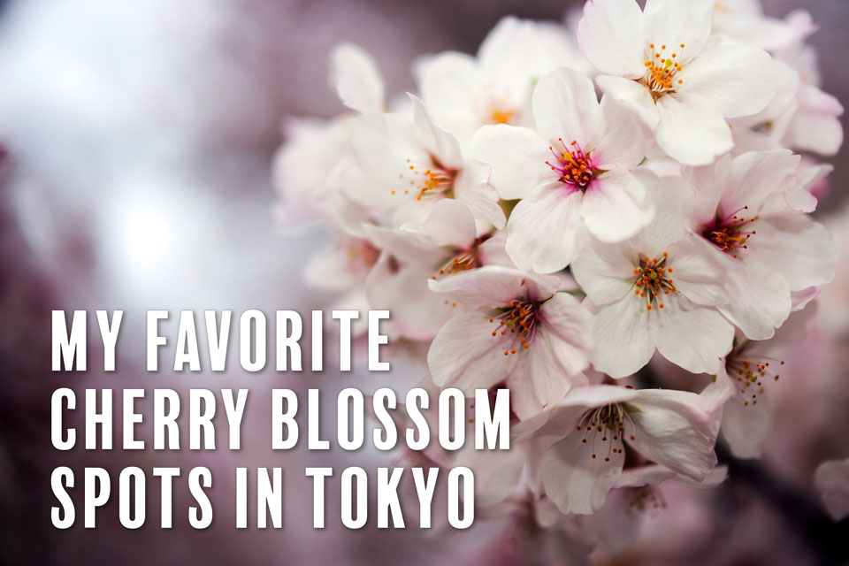 My Favorite Cherry Blossom Spots in Tokyo — EYExplore