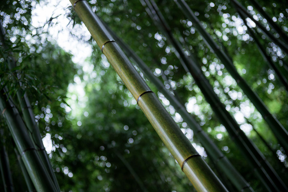 Bamboo at Adashino-Nenbutsuji.