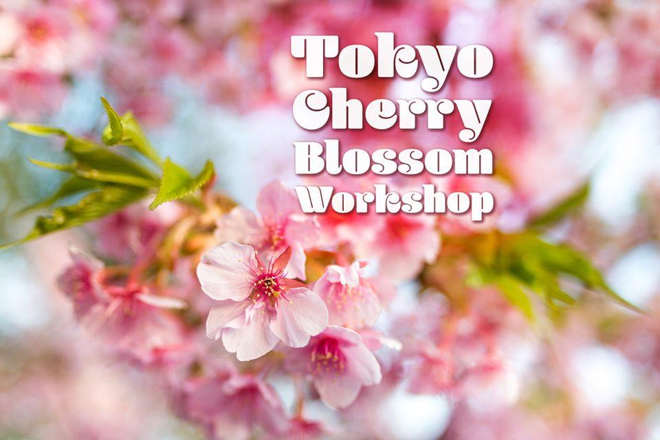 Tokyo Cherry Blossom Photo Workshop — EYExplore